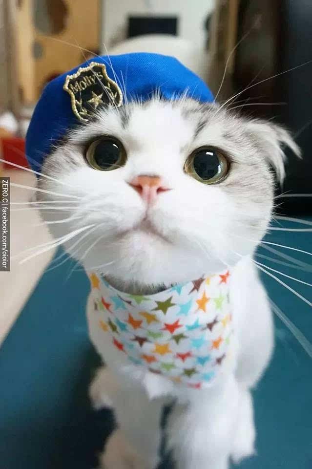 壁纸 动物 猫 猫咪 小猫 桌面 639_960 竖版 竖屏 手机
