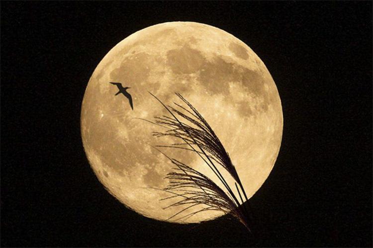 中秋大月亮图片