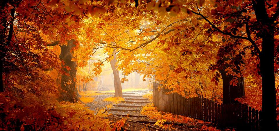 秋天的壁纸 树林 叶子 公园 风景 围栏图片