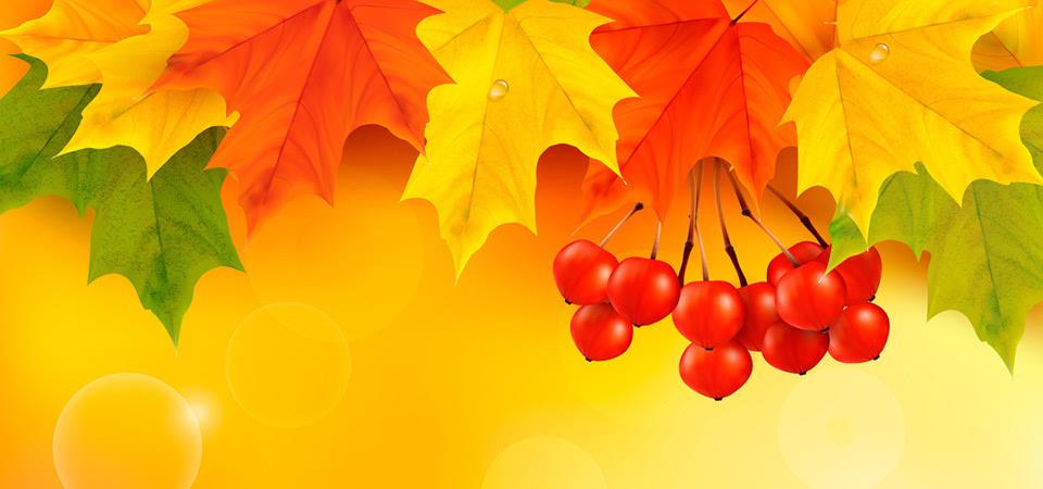 秋天 叶子 枫叶 果实 桌面壁纸