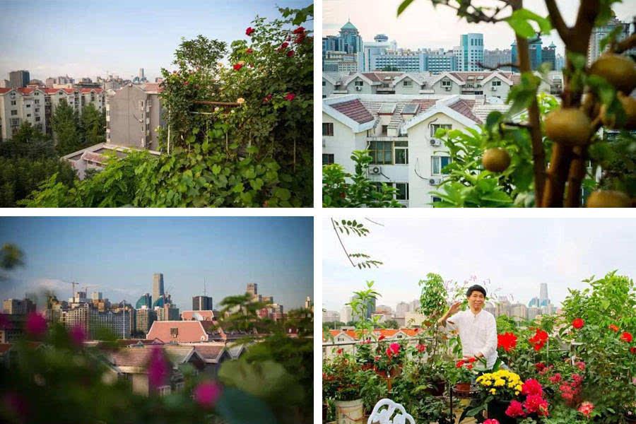 东城楼顶5层花园创北京最牛违建之最