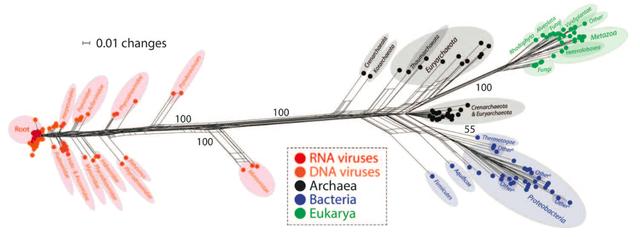 科技 正文  利用在线蛋白质折叠结构数据库,纳西尔和古斯塔沃用计算机