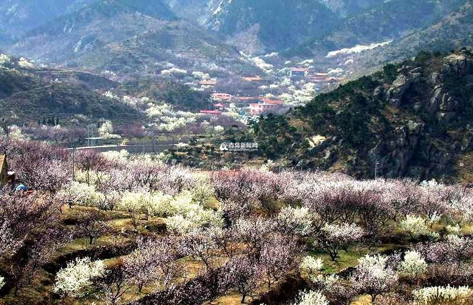 其中,青岛有两个村庄入选,分别是城阳区棉花社区以及即墨市西姜戈庄村