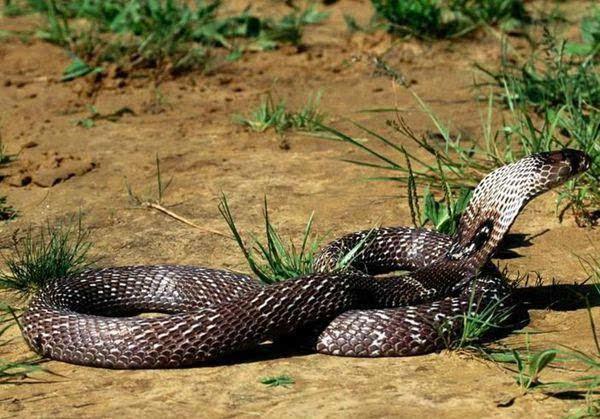 蛇图片大全可爱咬人