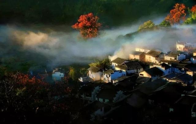 清晨雾气或炊烟中的火红枫树简直就美得不像人间之景了.