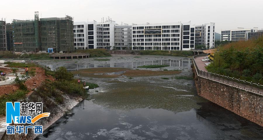 被污染的广西财经学院相思湖校区景观湖(11月4日摄).-南宁一大学图片