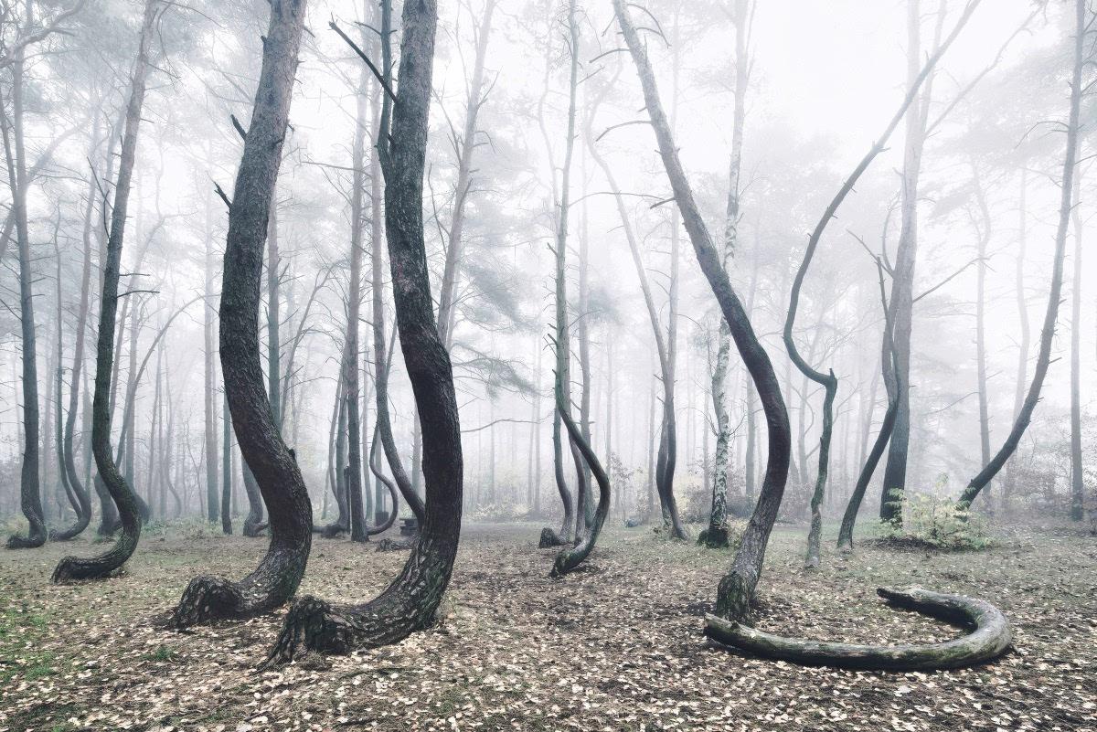 波兰西部森林图片