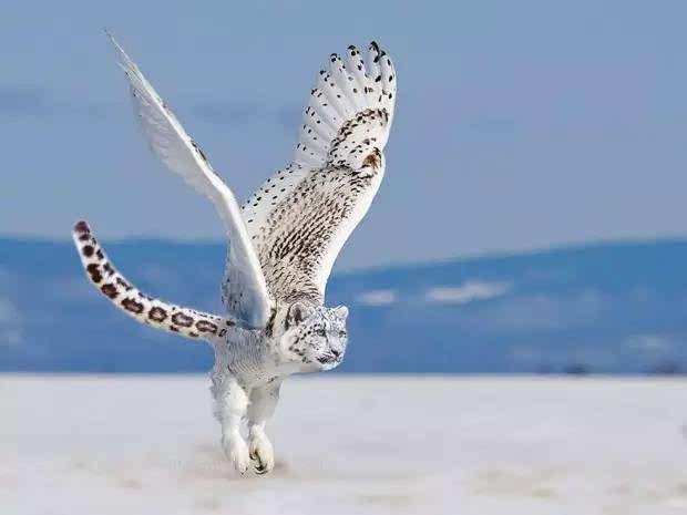 奇妙的动物合体