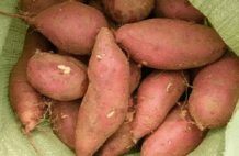 保存红薯,直接丢地上是大错!学会这招,放半年都不坏,越放越甜