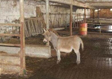 做爱强奸_21岁农场工人在谷仓内强奸一头母驴 人畜疯狂做爱惊呆