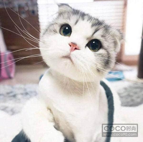 小色狗和猫交配_猫的品种大全及图片宠物专家整理