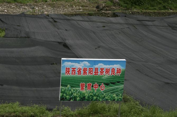 陜西紫陽縣退耕還茶模式