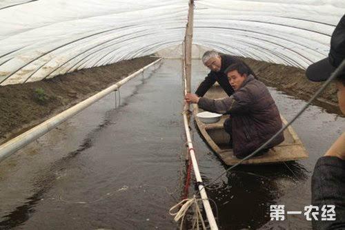 小龙虾养殖利润及成本计算方法介绍