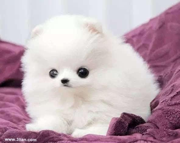大犬爱_《爱宠大机密》里的宠物,都是啥品种?_搜狐其它_搜狐网