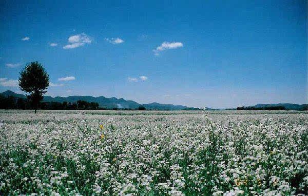 貴州旅游景點大全 一生中不容易錯過的風景!