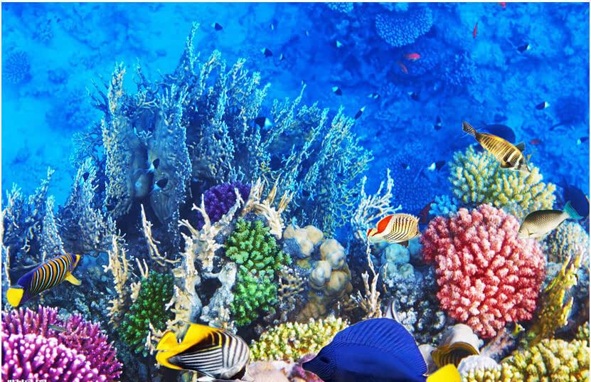【世界海洋日】氣候變化影響海洋生物多樣性圖片