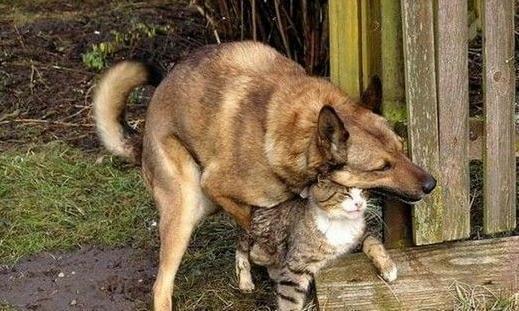 动物士狗交配_有时候,动物的交配行为也充满怪异色彩,甚至达到令人难以置信的程度.