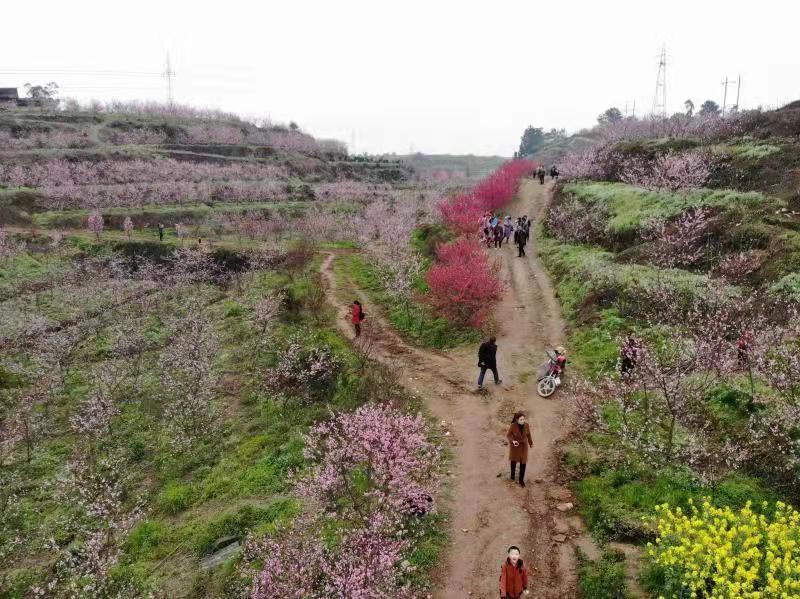 犍为县特色农产品报道:平峰果蔬专合社绿色产品人人夸